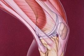 Cơ xương khớp